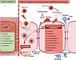 Disregulación endotelial por SARS-CoV-2