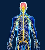 Curso Sistema didáctico para la vinculación básico- clínica del Sistema Nervioso
