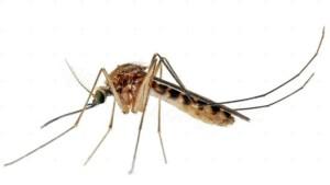 mosquito-e1467630143617-655x368