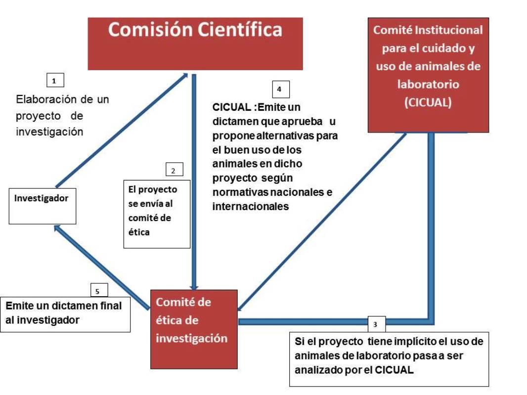 organigrama cicual