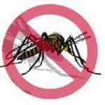 Eliminar Aedes