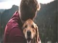 tenencia responsable de animales 1 pagina
